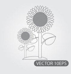 sunflowers icon black and white outline drawing vector image vector image