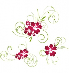 hibiscus floral elements vector image