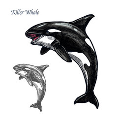 Killer whale or orca sea animal isolated sketch vector