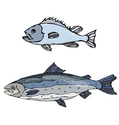 set of two fishes freshwater fish vector image