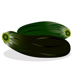 Zucchini vector image