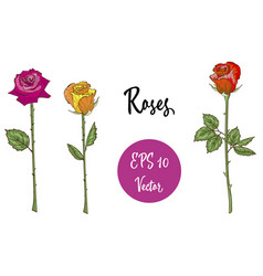 set of roses isolated vector image vector image
