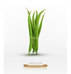 green beans bound sheaf isolated vector image