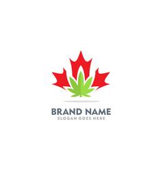 cannabis leaf canada logo vector image