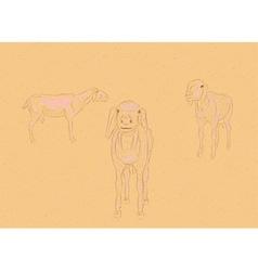 Hand Drawn Sheeps vector image