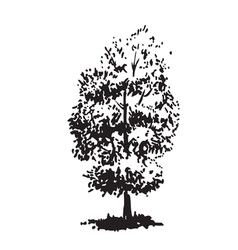 Hand-drawn tree linden black and white realistic vector