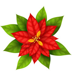 Christmas Star flower vector image vector image