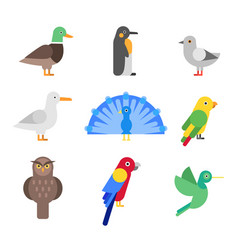 stylized of different birds vector image vector image