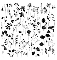 Collection of stylized herbs and plants Black vector