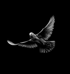 Flying white dove on a black background vector