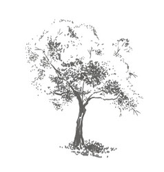 Hand-drawn aple tree realistic image in shades vector