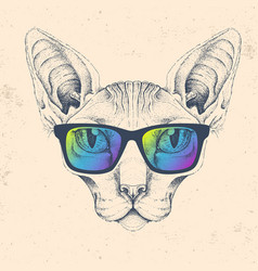Hipster animal sphynx cat with glasses vector