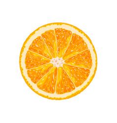Orange slice of citrus vector