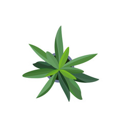 top view green plants easy copy paste in your vector image