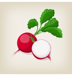 Whole and half radishes with leaves vector image