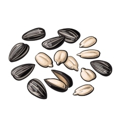 Whole and peeled sunflower seeds isolated on white vector image
