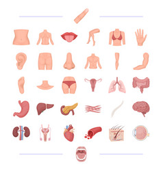 Body physiology medicine and other web icon in vector