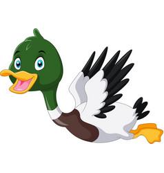cute cartoon mallard duck flying vector image