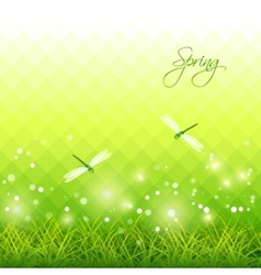 Green Grass Dragonfly Season Background vector image