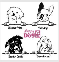 Puppy bulldog border collie bloodhound bichon vector