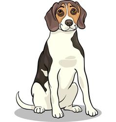 beagle dog cartoon vector image