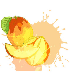fresh mango juice vector image
