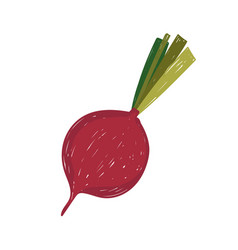 healthy food vegetable beetroot flat icon style vector image