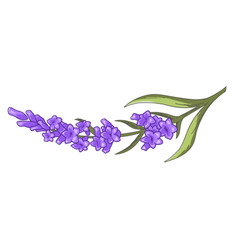 lavender floral branch with blossom flower decor vector image
