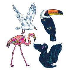 super set of cute cartoon birds vector image