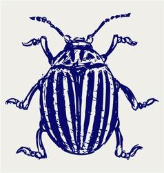 Beetle leptinotarsa decemlineata vector image