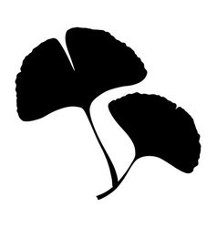 ginkgo biloba branch with leaf silhouette vector image