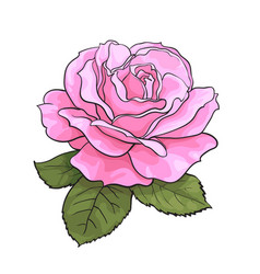 Pink rose flower with green leaves realistic hand vector