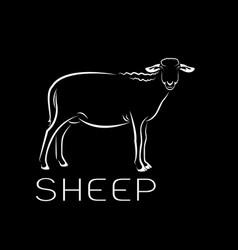 sheep on black background farm animals vector image
