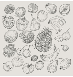 Set of fruits Freehand drawing vector image vector image