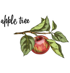 ripe red apple on a branch with leaves isolated vector image