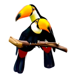 Toco toucans sitting on the branch vector image vector image