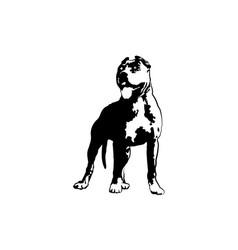 american pit bull pitbull bully staffordshire vector image