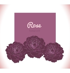 Purple dark rose background vector image