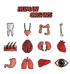 Human organs flat icons set vector image