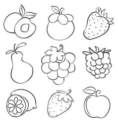 Doodle of fruit design hand draw vector