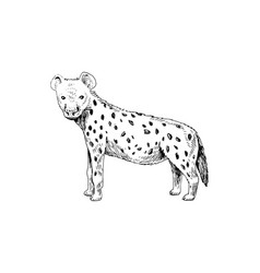 hand drawn spotted hyena vector image