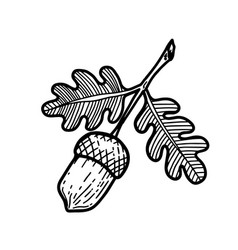 oak acorn in engraving style design element for vector image