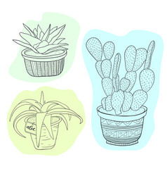 succulents and cactus set with flowers in pots vector image