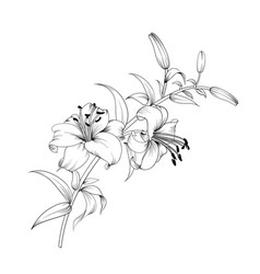 White lily flower vector