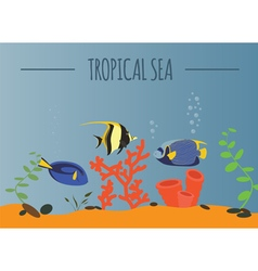 Tropical sea graphic template vector image