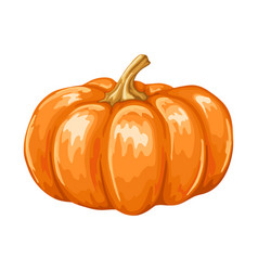 autumn ripe pumpkin vector image