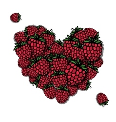 Love raspberry Heart sketch for your design vector