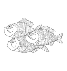 Piranha coloring book for adults vector