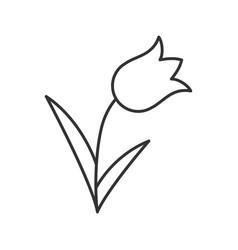 Tulip linear icon vector