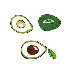 A colored avocado vector